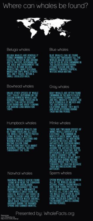 Where Do Whales Live Infographic